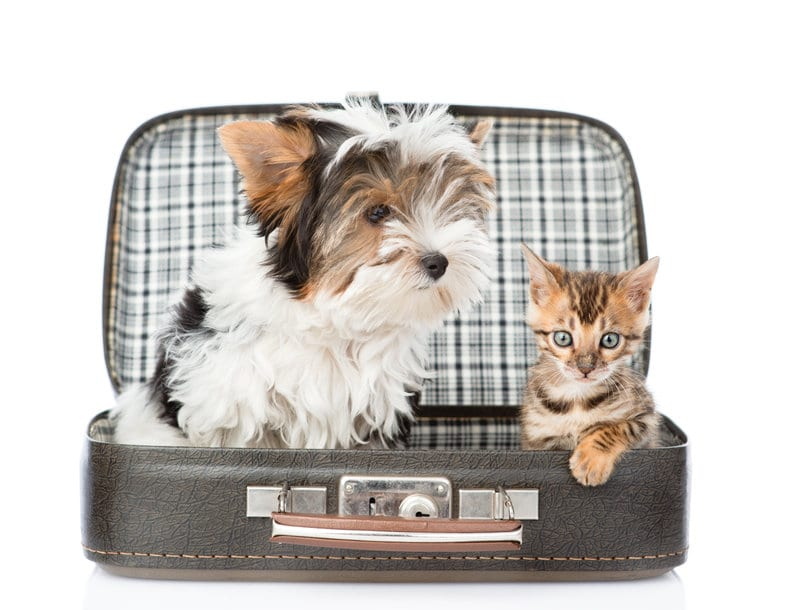 Travel Tips For Pets