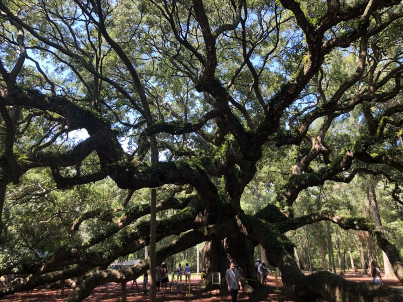 Charleston and Savannah Road Trip